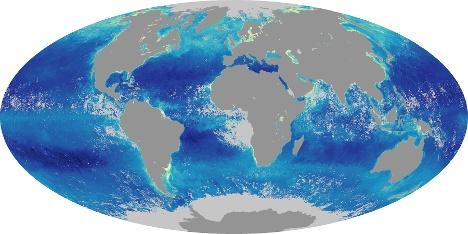 Weltkarte Chlorophyll